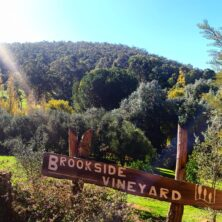 Brookside Vineyard
