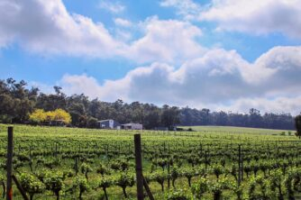 Hainault Winery & Cellar Door