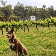 Hainault Vineyard – Perth Hills